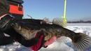 Зимняя рыбалка на блесну по первому льду Отменный клёв динозавриков