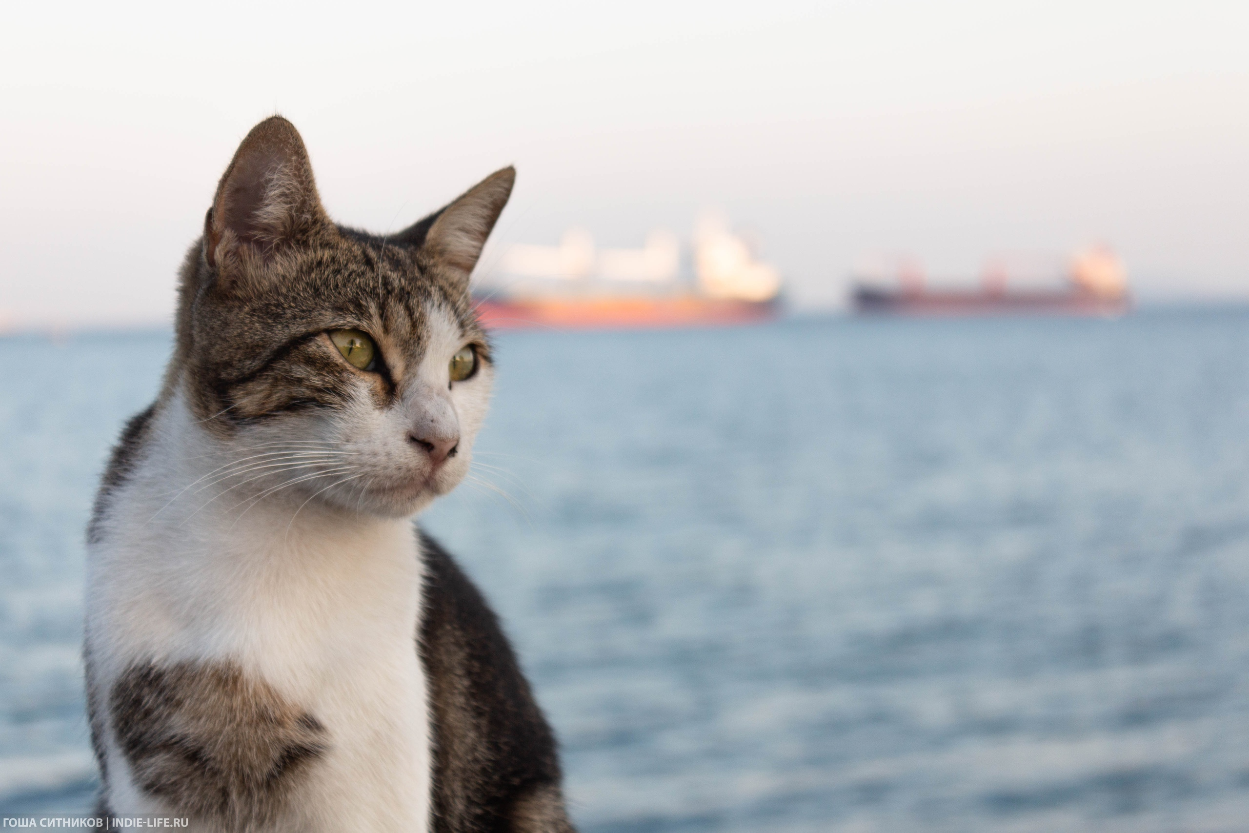 Кот на набережной Мраморног оморя