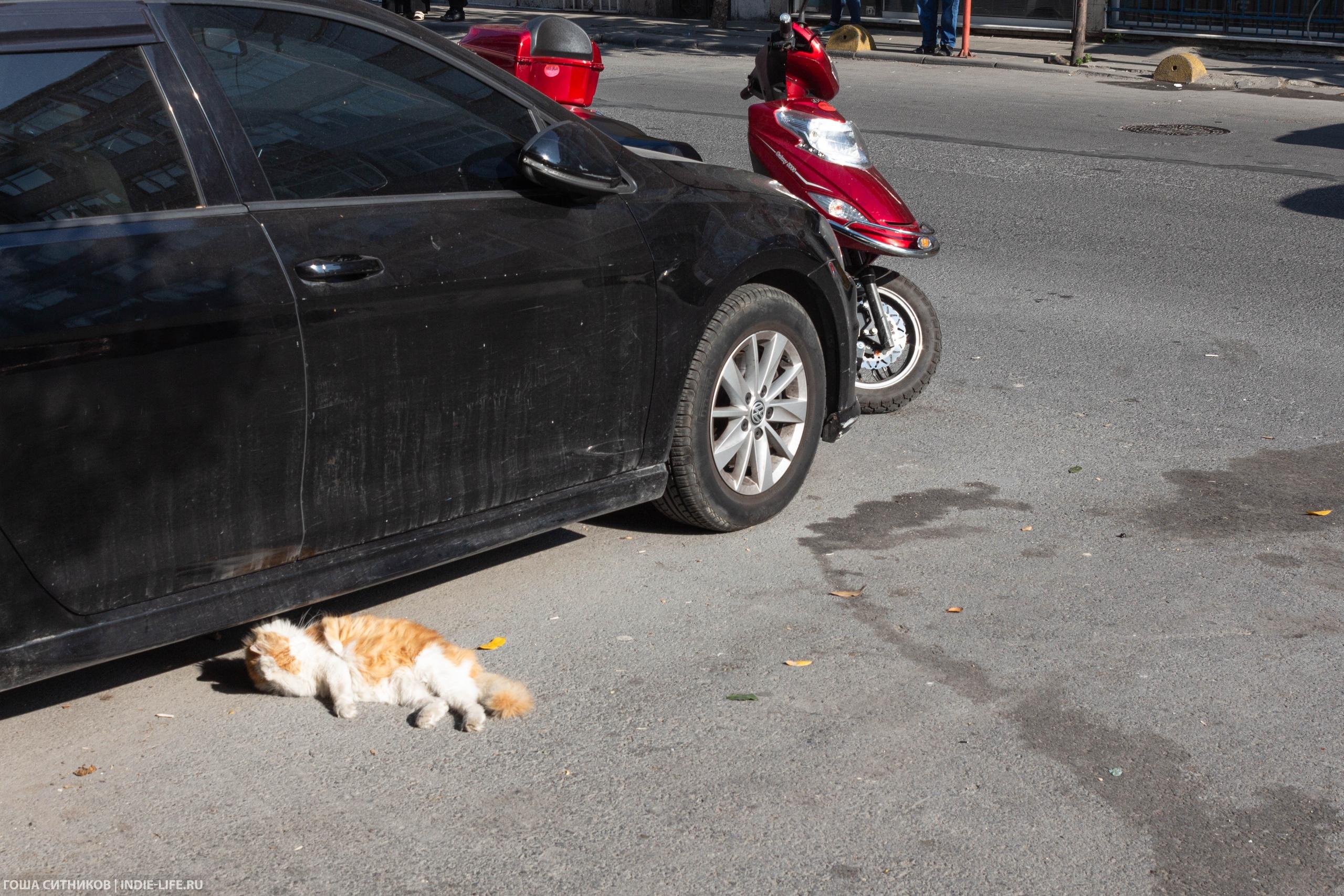 Кот на солнце перед машиной
