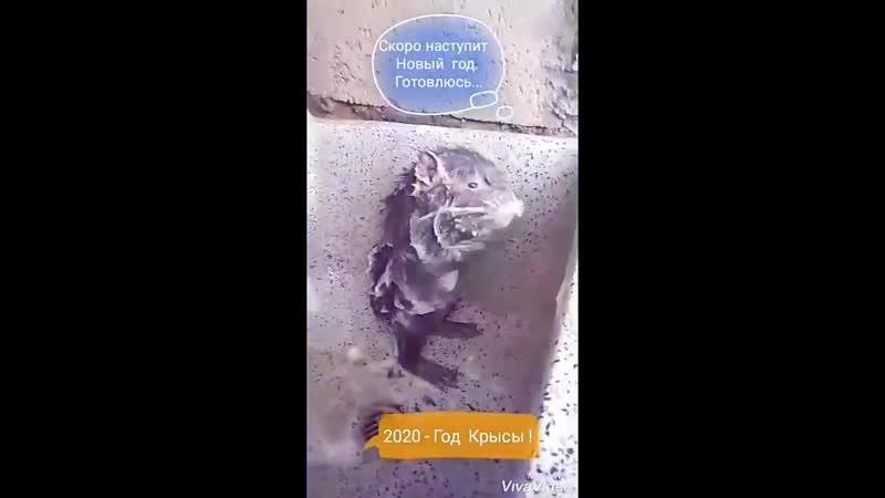 Video d95f77c2a5f0921961fff8990456461c