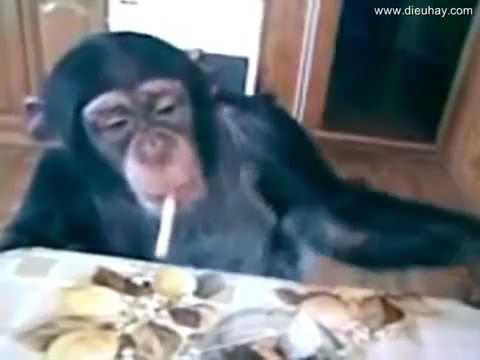 Aik Cigarette CAPSTAN to de de I Monkey Funny Video Compilation I My PeTs