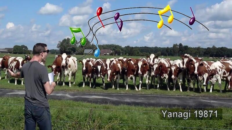 Live Burp Concert in Front of a Herd of Cows Part 2