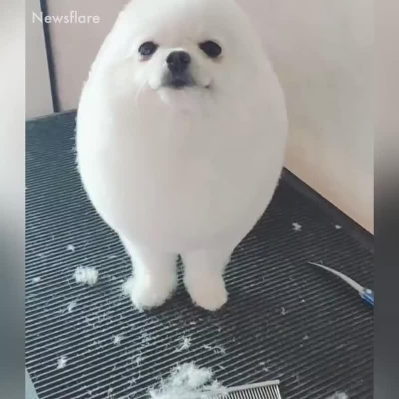 Постригли!