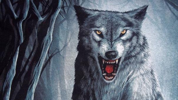Волки Обои На Телефон Бесплатно