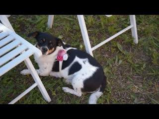 Свадебный клип | Юрий и Ольга