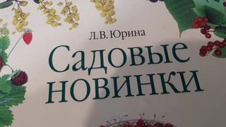 ГИБРИД МАЛИНА КНЯЖЕНИКА -СОРТ ХЕЙСА ДЛЯ ЛИКЕРОВ И СОКОВ.ГДЕ САЖЕНЦЫ ЛУЧШЕ КУПИТЬ?
