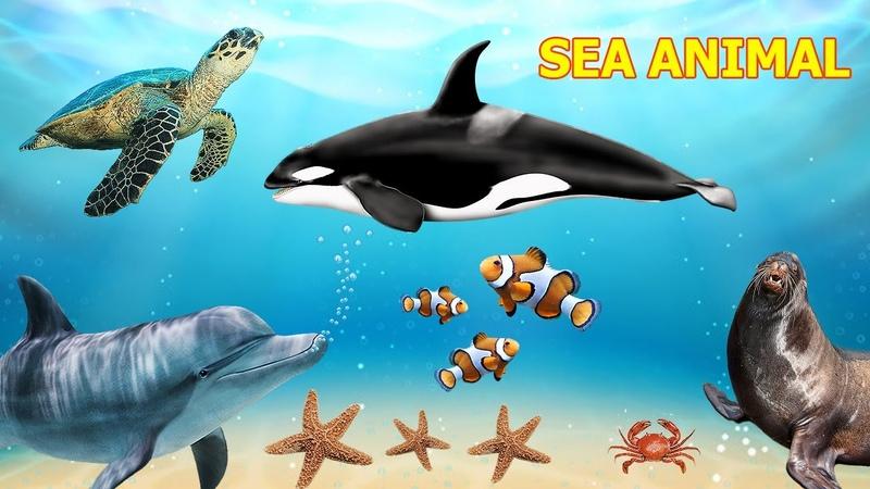 Nome e Som dos Animais Marinhos Animais do Fundo do Mar Sea Animal
