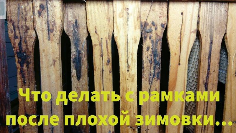 Что делать с рамками после плохой зимовки Повреждённые нозематозом рамки Beekeeping for beginners