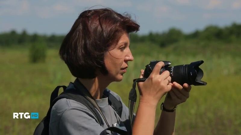 Сестрорецк Сестрорецкое болото Природа Cестрорецкие низины The Nature of the Sestroretsk Lowland
