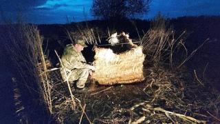 Разведка и подготовка к охоте на гуся