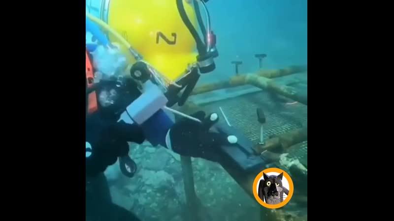 Под водой тоже нужно работать Работа не Волк