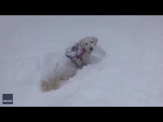 собакен пытается выбраться с больших сугробов снега