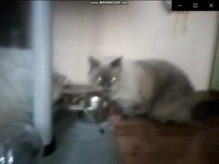 Пародии на рекламу сухой и влажный корм для кошек Purina ONE, Gourmet, Felix. Полная версия Часть 3!