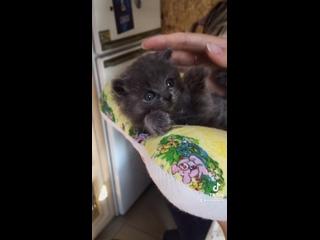 Видео от КОШКИН ДОМ  - приют для кошек в Челябинске