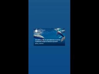 Лечебная песня дельфинов