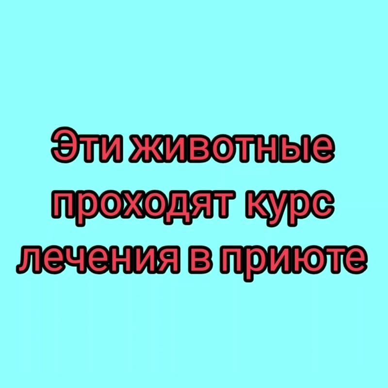 InShot_20201110_183126544.mp4