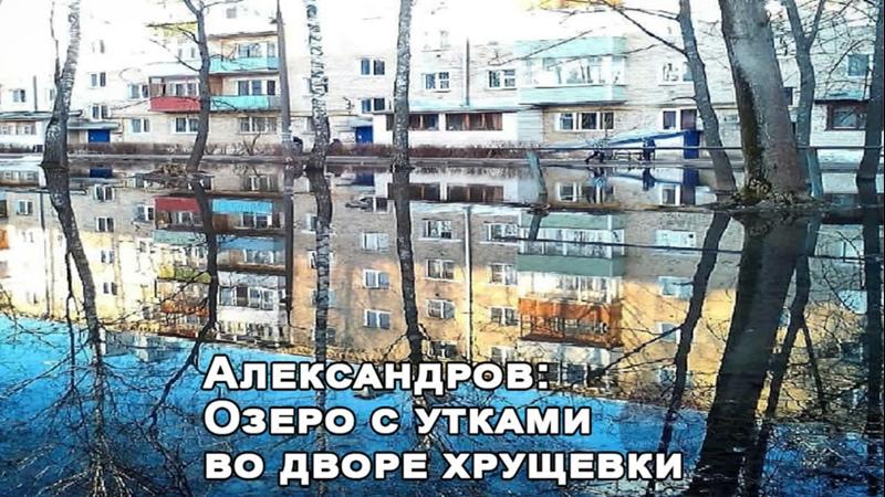 Александров Озеро с утками во дворе хрущевки