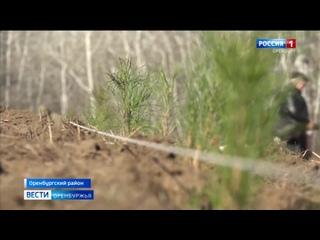 Оренбуржье присоединилось к экологической акции Сохраним лес