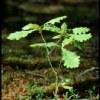 22 ноября - Спасение саженцев молодых дубов