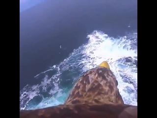 Полёт орла с камерой