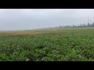 Видео от Мамеда Гасанова