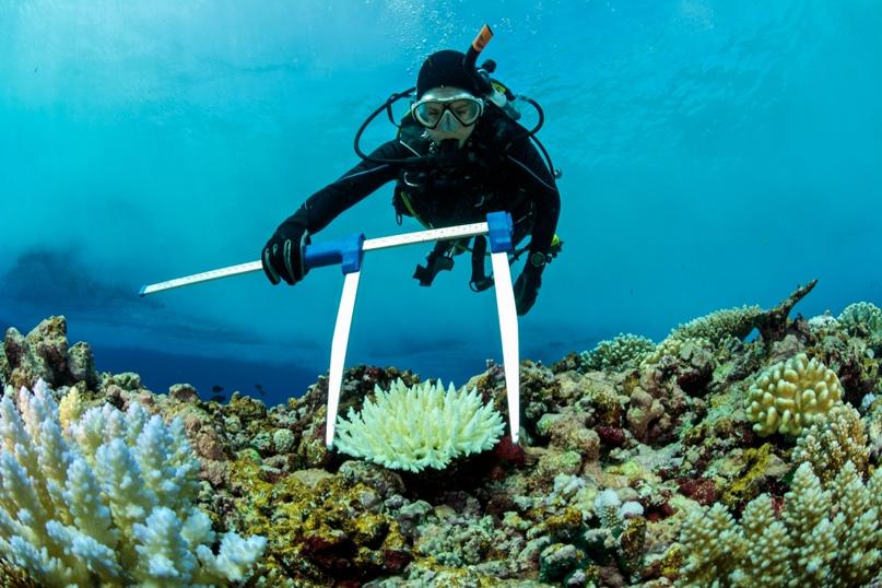Океанолог на занятиях