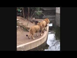 Подборка неуклюжих животных gjl,jhrf yterk.;b[ ;bdjnys[