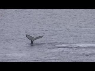 4. Антарктида. Море Беллинсгаузена. Бухта. Горы. Киты (муз. видео-клип)