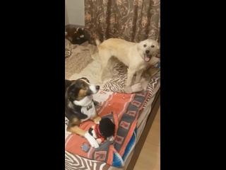 Помощь бездомным животным г.Светлогорск kullanıcısından video