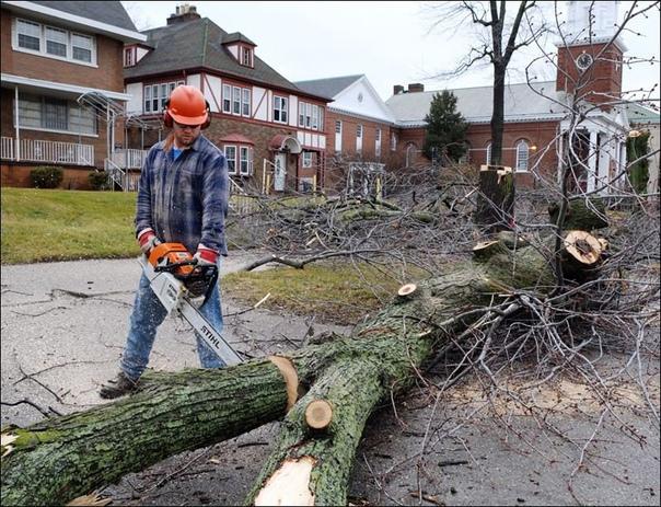 Самарским коммунальщикам разрешат вырубать деревья...