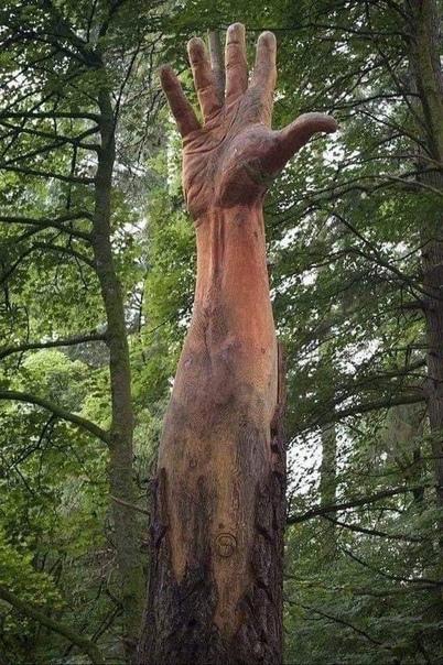 Самое высокое дерево в Уэльсе (в Великобритании