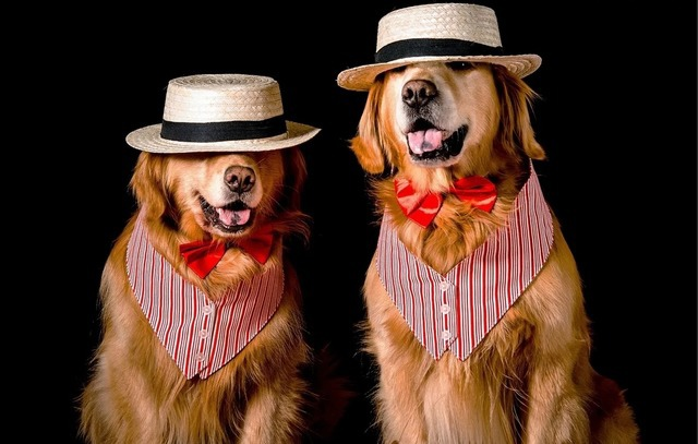 веселые истории про собак,