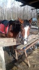 Похожа на лошадь становится) Наша Венера 🐎 #проводите_время_с_пользой #лошади #весна #Митино #Москва