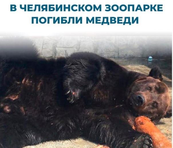 ⚡⚡ В зоопарке отравили животных. Умерли медведи и ...