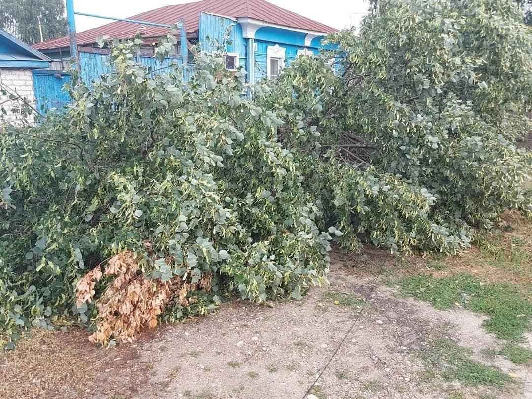 В Петровском районе ликвидируют последствия ураганного ветра