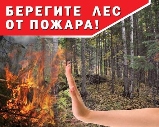 Правила пожарной безопасности в лесу