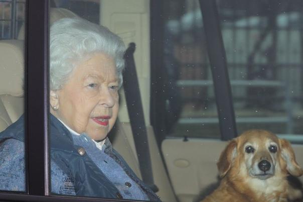 Королева Елизавета оплакивает потерю любимой собаки