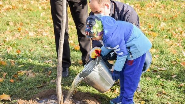 В Новочеркасске высадили более 500 новых деревьевС...