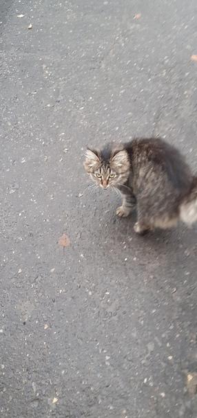 ТЕМА ЖИВОТНВЕ1. Прибился котенок, хозяева, ищите е...