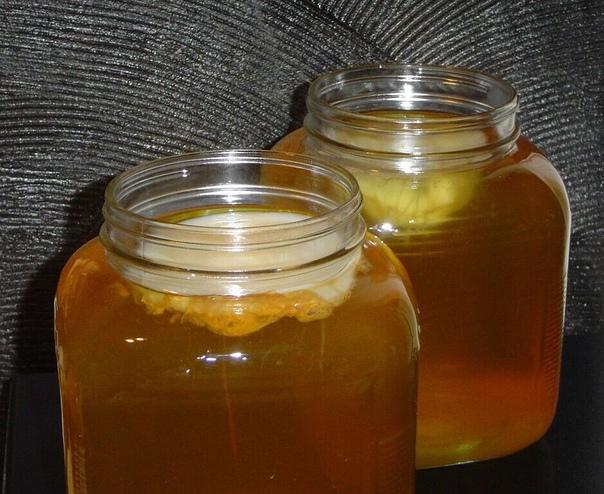 2 способа вырастить чайный гриб