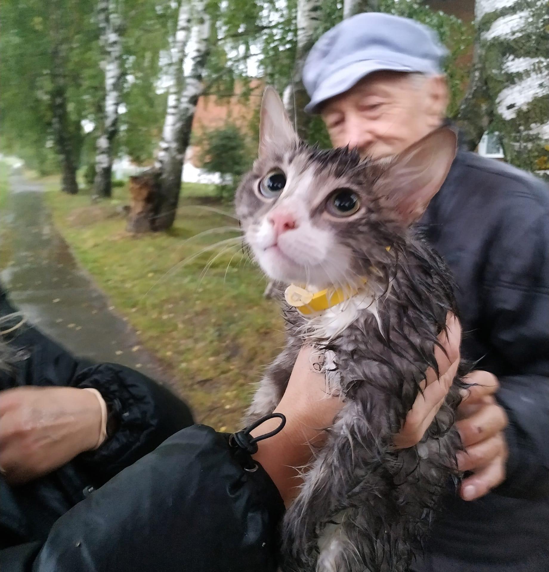 На фото кот Тимошка и он, холодный