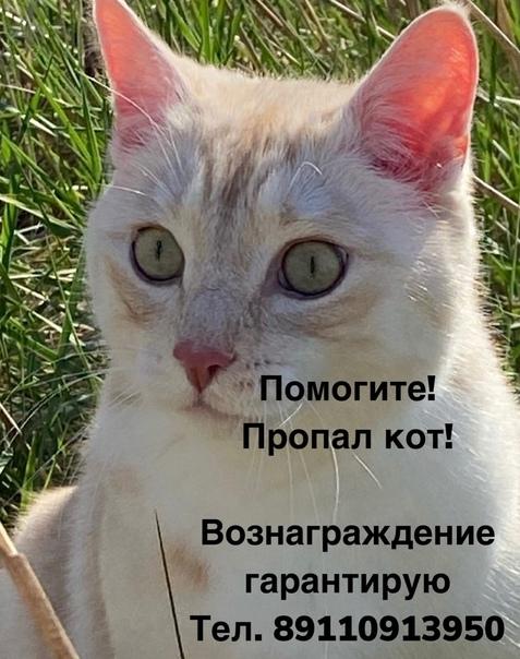 Добрый день! Вдруг кто-нибудь видел кота, пожалуйс...