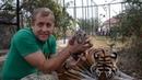 Мама тигрица принимает ЧЕТВЕРТОГО ТИГРЕНКА