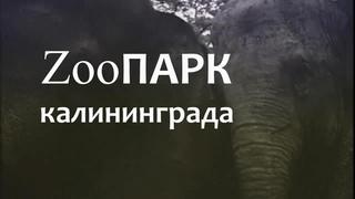 ZooПАРК калининграда.