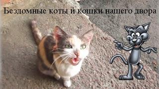 Бездомные коты и кошки  Время ужина