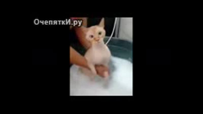 Кот в шоке от купания 3gp