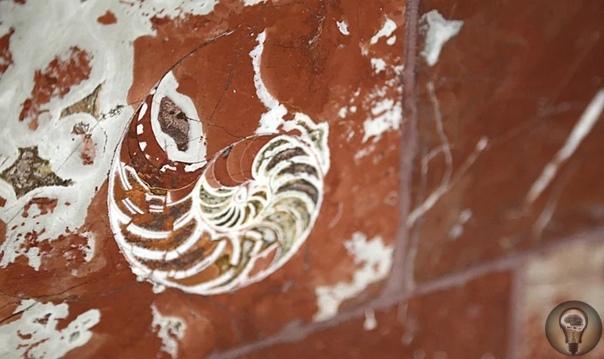 Древние хищники московской подземки: что скрывается в метро До девяти миллионов человек ежедневно пользуется московским метро, но мало кто подозревает, что скрывается в стенах и колоннах