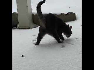 первый раз увидел снег
