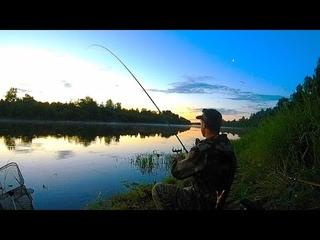 Донки на живца. Рыбалка на фидер. Жареха из царь-рыбы.