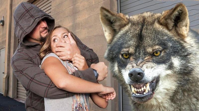 Волк не оставил тварям ни единого шанса За девушку он был готов уничтожить